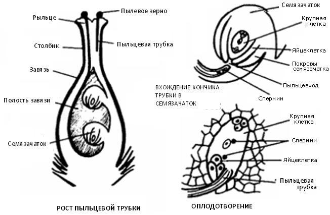 titki-soski-torchat